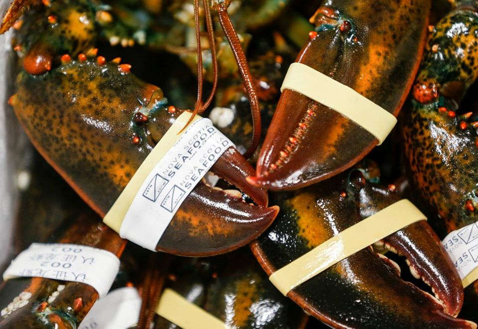 A new $2.5 million lobster quality and innovation centre will find new ways to further advance the quality and export value of lobster.