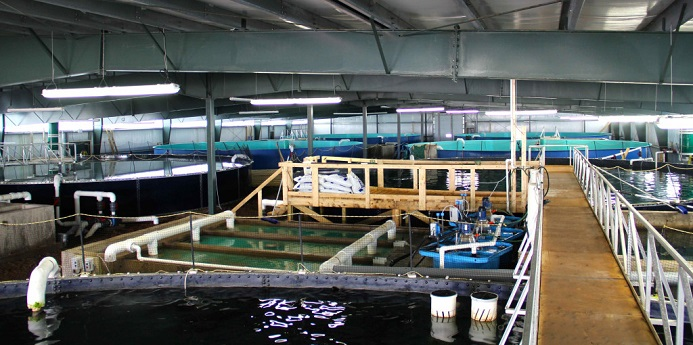 The first land-based salmon farm