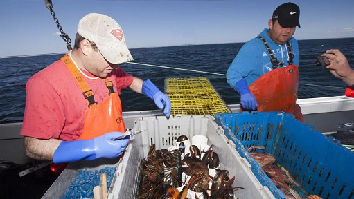 Lobster Industry Invited to Provide Input