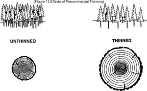 Figure 13: Effects of Preommercial Thinning