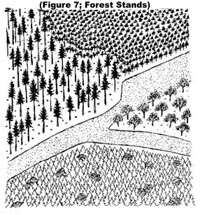 Figure 7: Forest Stands