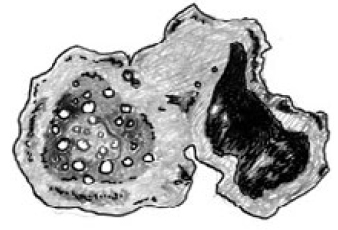 fig 15