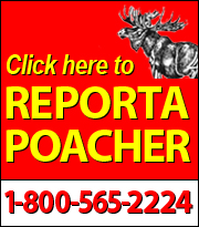 ReportAPoacher.jpg
