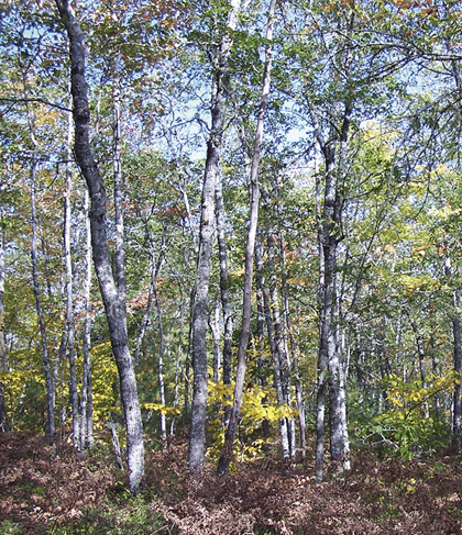 Forest Vegetation types - IH2 | novascotia ca