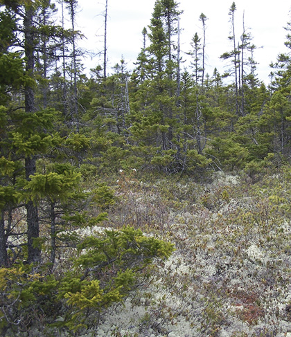 Forest Vegetation Types Ow2 Novascotia Ca