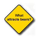 what attracts bears