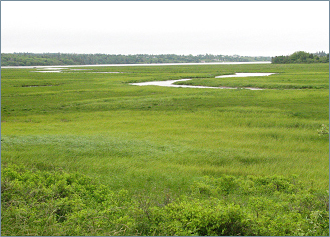 Salt marsh along the eastern shore