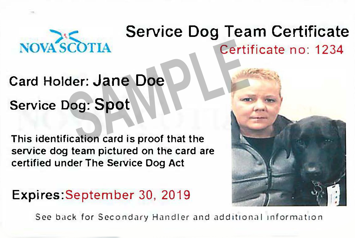 Service Dogs In Nova Scotia Its Your Duty To Accommodate Cfib