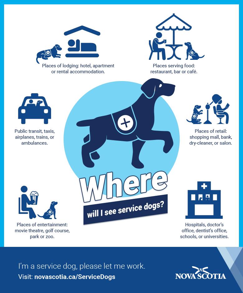 applying for service dog team certification - government of nova ...